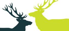 Weihnachtskarte Zwei Hirsche in Grün und Dunkelgrau