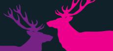 Weihnachtskarte Zwei Hirsche in Magenta und Vilolett auf dunkelgrau